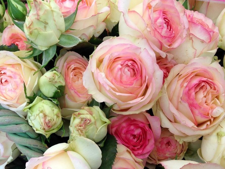 Auf dem Bild ist ein Rosenstrauß zu sehen als Symbol dafür, dass Unternehmerinnen aufblühen.